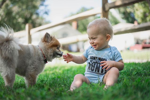 Hund und Baby sitzen im Grad und lernen sich kennen