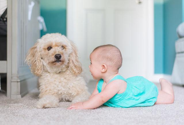 Hund und Baby – so gelingt das Zusammenleben